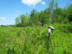 Clarence Bluebird Trail nest box in field. © John Benzee