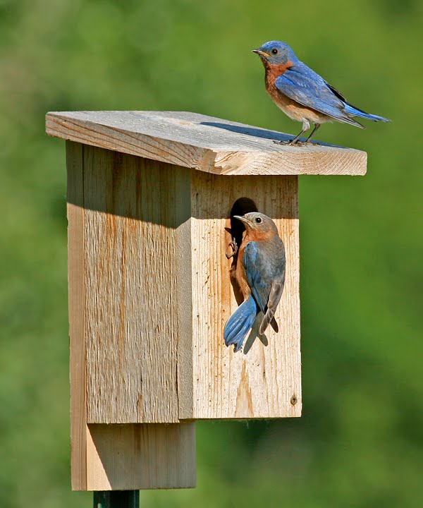 Nest Box Summary – August 2015