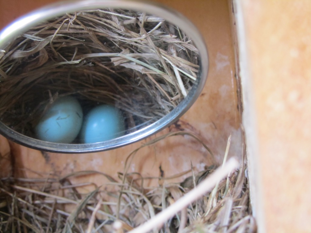 Nest Check and Updates