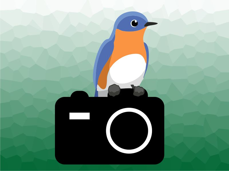 Vector drawing of bluebird sitting on camera.